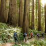 Students hike through trees and ferns at Redwoods National Park