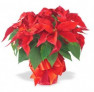 Agnes Flanagan Chapel is beautifully decorated with poinsettias, greens, and candles for the Holi...