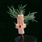 Giant Sequoia, Elizabeth Demaray. Giant sequoia sapling wearing a knit sweater, dimensions variab...
