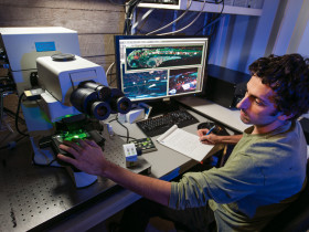 "Zac Tobias B.A.'12, Weissman-Unni's lab technician, works at the microscope to collect multicolor images of developing zebrafish that he's injected with ""brainbow"" DNA."