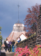 Architects plan to restore the ornate dovecote and its towering weather vane, which have become c...
