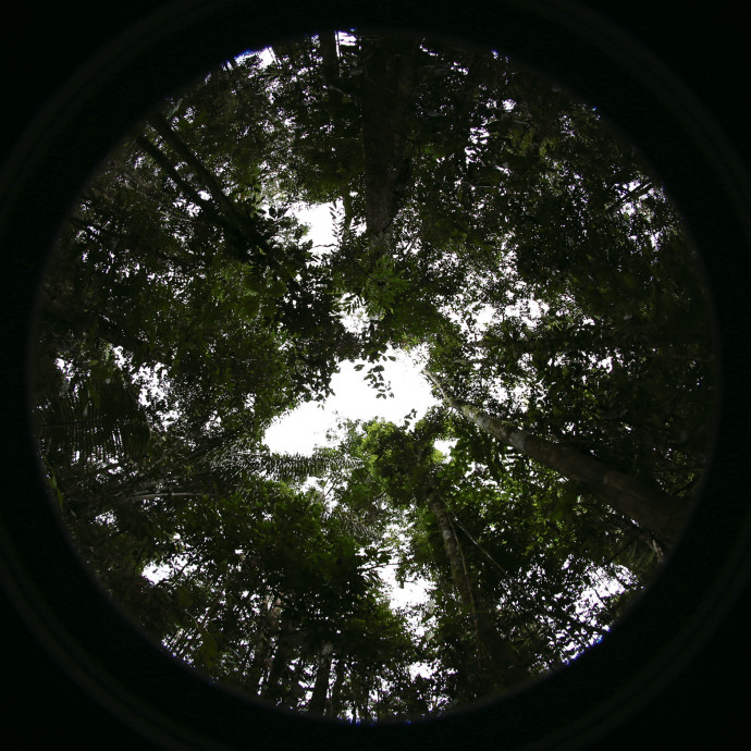 "Taken from the ground up, provide a ""seedling?s-eye view? of available light in the forest ..."