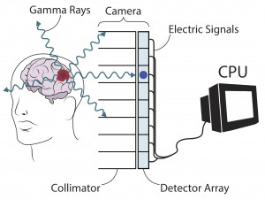 Illustration (based on the sketch above) by Cyan Cowap showing the use of gamma rays to visualize...
