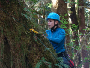 Research team member Rachel Rogers '11 takes a sample from a tree in the Pacific Northwest.