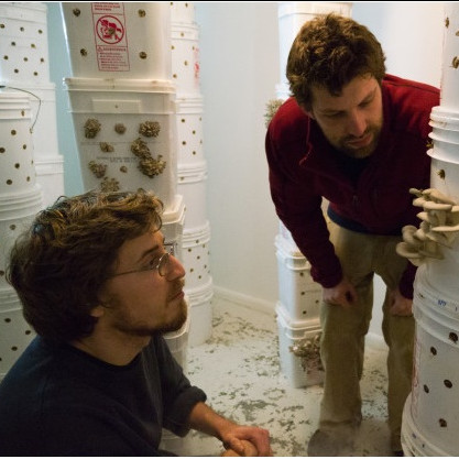 Will Fortini B.A. '12 and Ryan Bubriski B.A. '12 inspect the oyster mushrooms growing in the ...