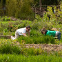 Lewis & Clark community members volunteered at Tryon Life Community Farm in 2010.